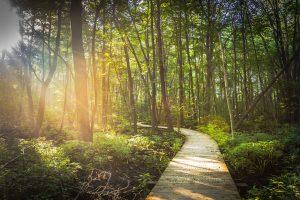 Vejen til et bedre liv. Et Bevidst Liv. Sti i en skov.