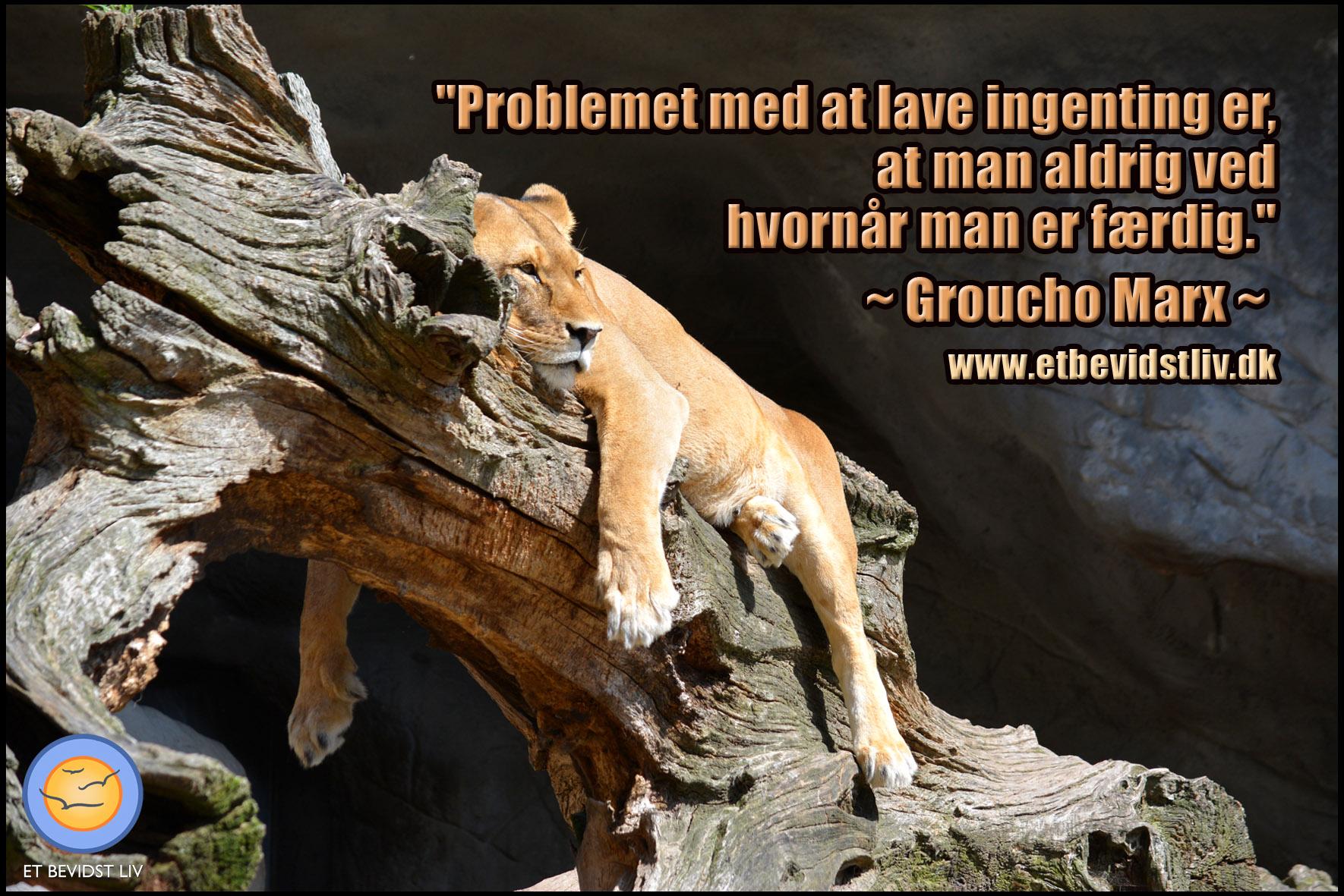 Billede: Løvinde som ligger afslappet på et træ. Tekst: Sjovt citat af Groucho Marx.