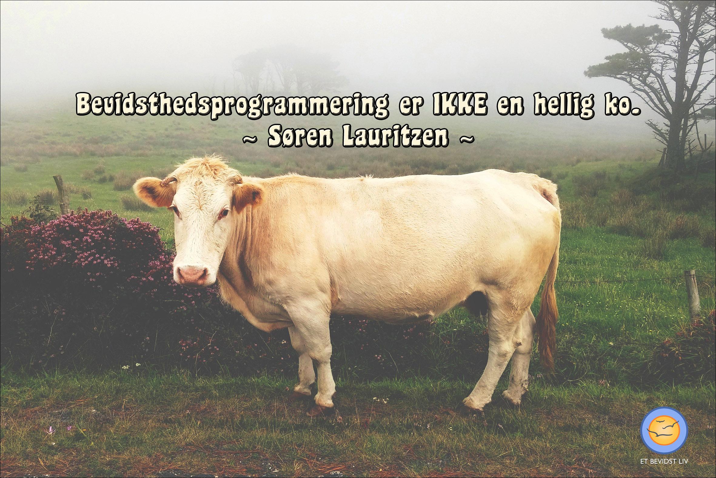 Foto: Beige ko på en tåget mark. Tekst: Bevidsthedsprogrammering er IKKE en hellig ko. (Søren Lauritzen)