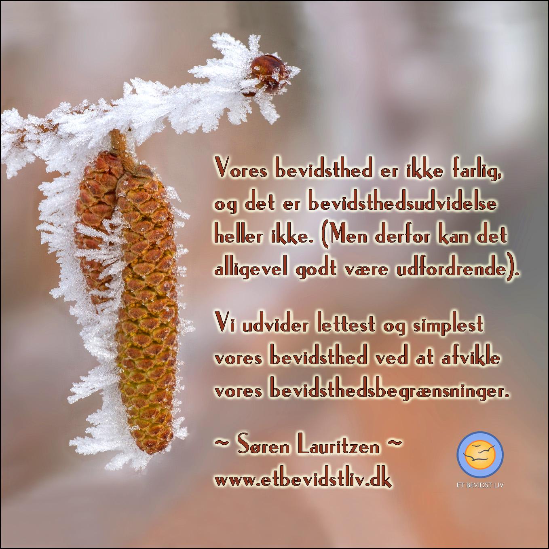 FOTO: Nærbillede af frost på et birketræ. TEKST: Der er ikke noget farligt i hverken bevidsthed eller bevidsthedsudvidelse, og den nemmeste måde at udvide sin bevidsthed på er ved at afvikle sine bevidsthedsbegrænsninger.