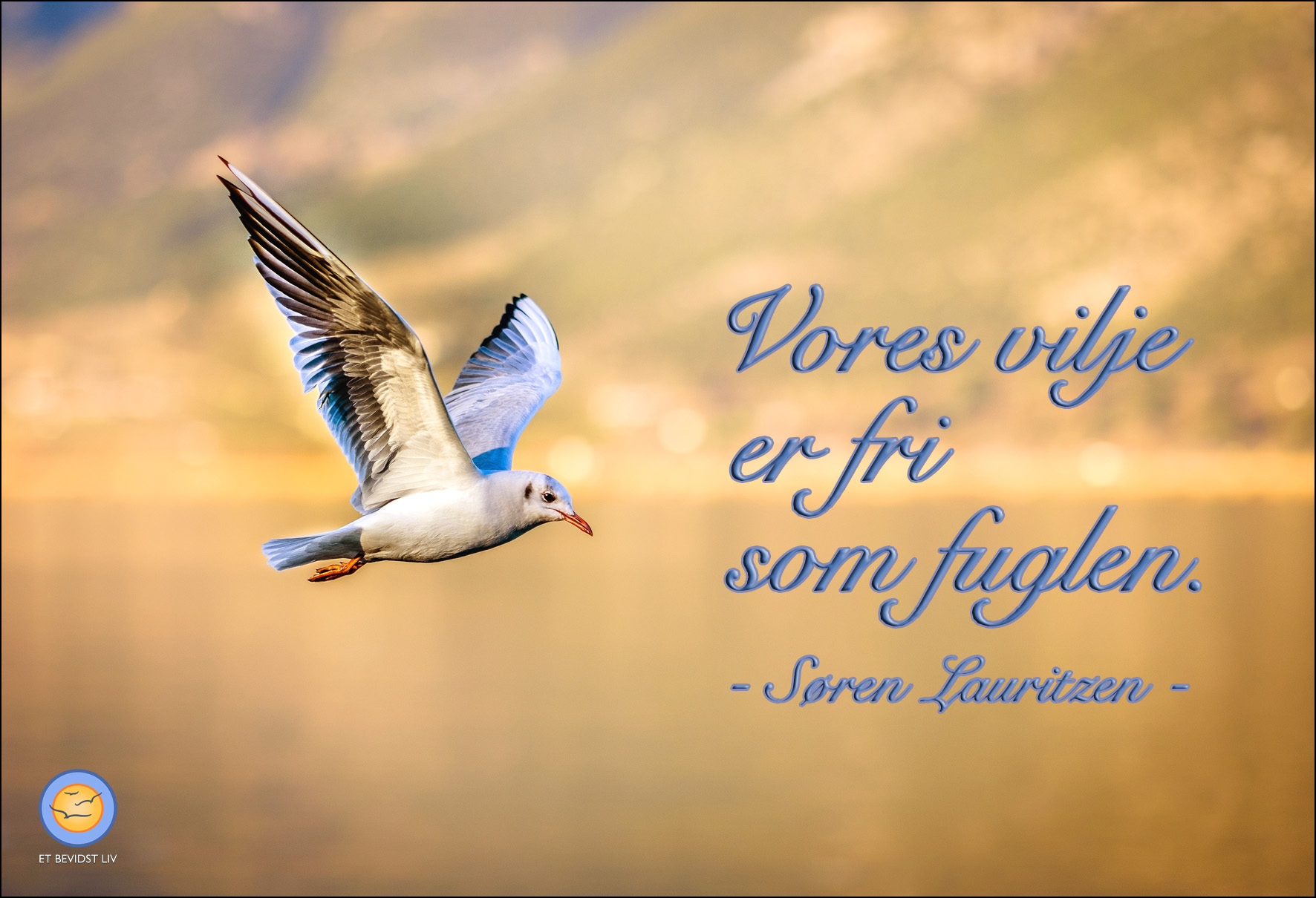 Foto: Flyvende måge ved sø i solnedgangslys. Tekst: Vores vilje er fri som fuglen.