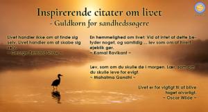 Inspirerende citater om livet. Billede af fiskehejre i solnedgang eller solopgang.