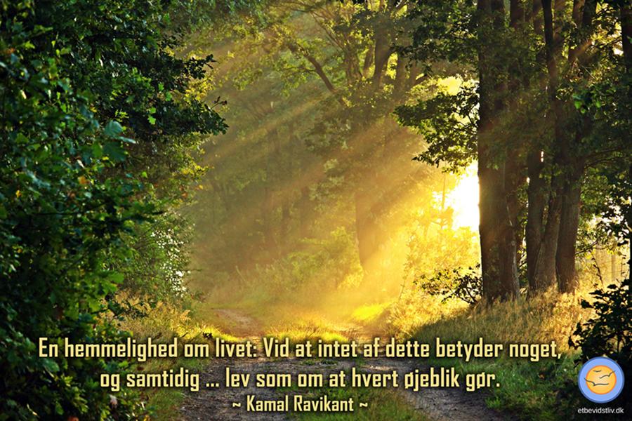 Billede af sol i skoven. Dette betyder intet og samtidig alt. Citat af Kamal Ravikant
