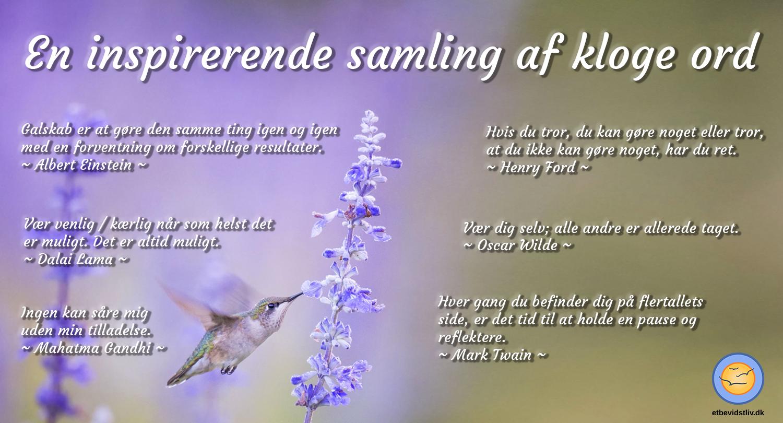 Kolibri, der suger nektar. Inspirerende samling af kloge ord.