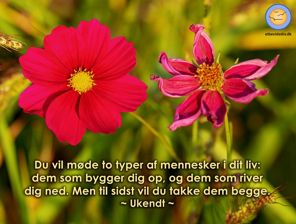 Billede af blomst i flor og vissen blomst. Alt du møder, er en gave.